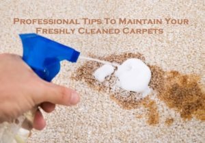Professional Tips To Maintain Your Freshly Cleaned Carpets